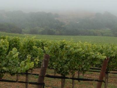 Jamie Slone Wines