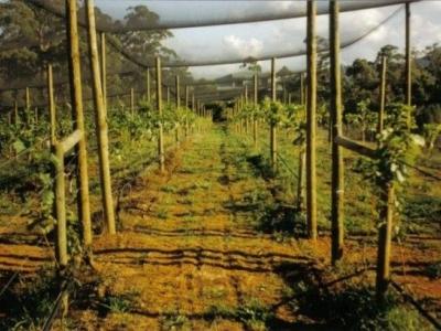 Motton Terraces Vineyard & Wines