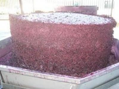 Pondalowie Vineyards