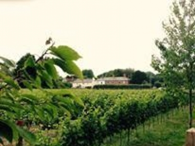 Willow Creek Vineyard
