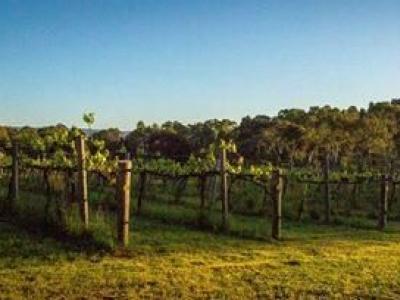 Lavina Wines