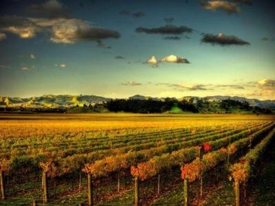 Brunton Road Wines